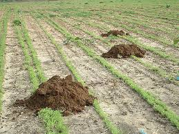Mole mound - how to get rid of moles