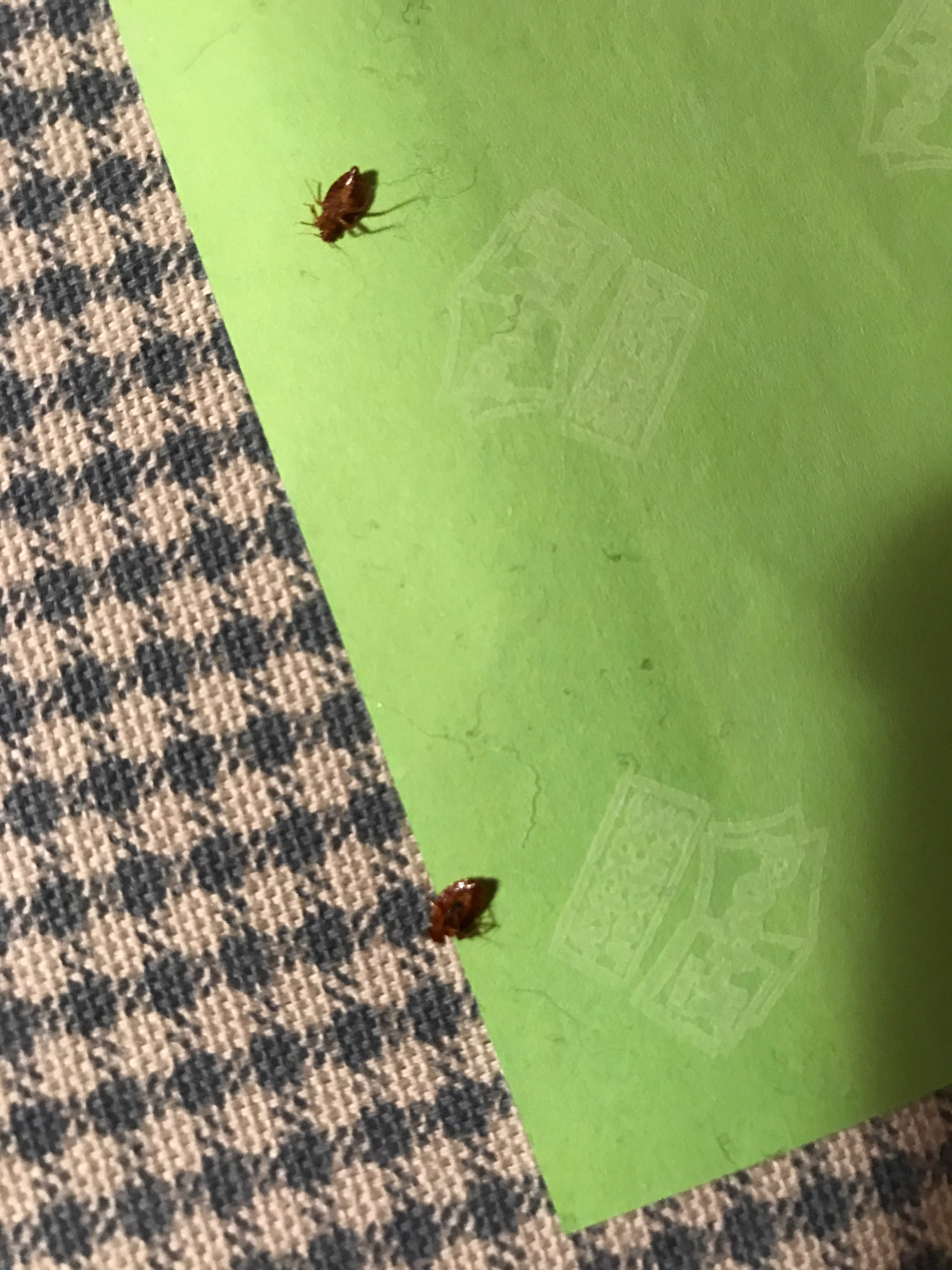 Bed Bug Treatment Cost By Type