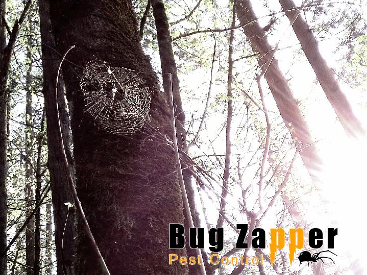 1 Albany Oregon Exterminator Bug Zapper Pest Control